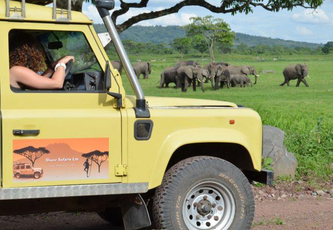 Camp & Lodge Safaris