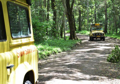 Self Drive Safaris - Forest