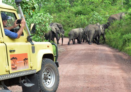 African elephants - Shaw Safaris Tanzania