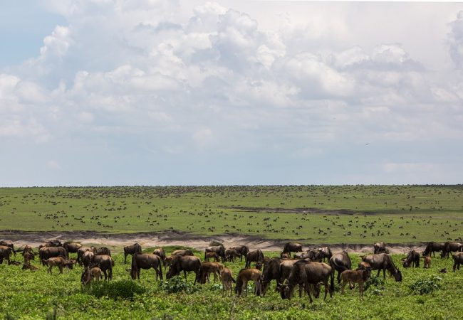 Ngorongoro National Conservation Area