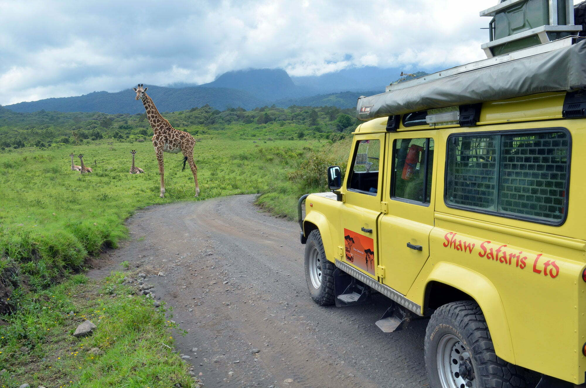 vehicle, giraffes jeep, yellow